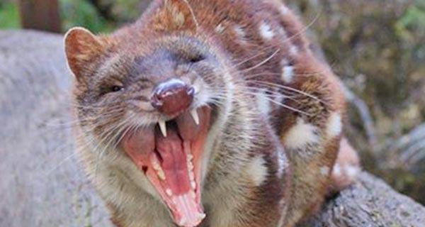 Wild Life Park In Tasmania